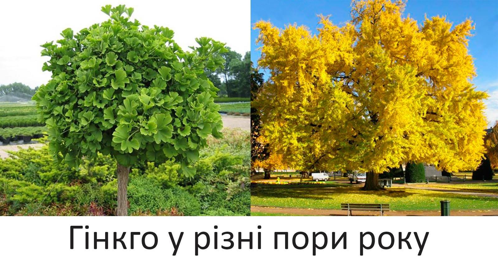 Ужгород ПК результати